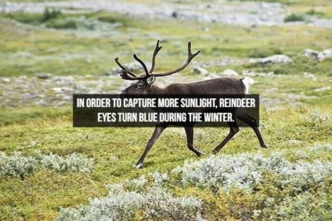 Captivating Animal Facts You Must Know About