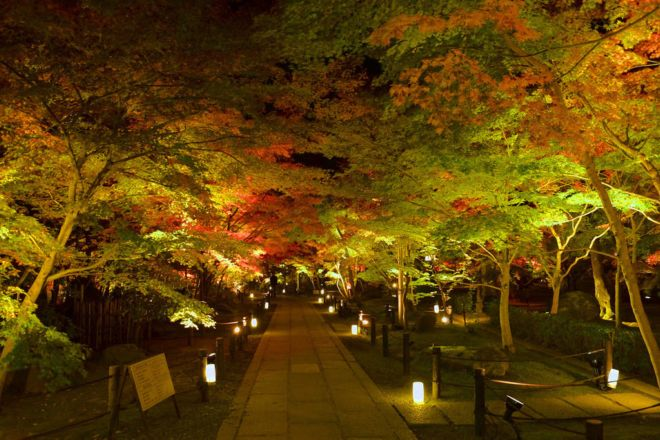 Feel The Beauty Of Autumn At Kyoto, Japan