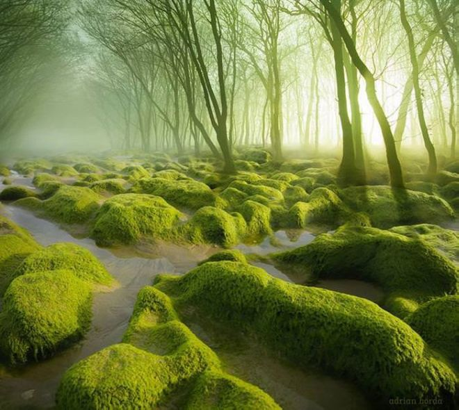Take A Stroll In These 13 Mysterious And Magical Forests