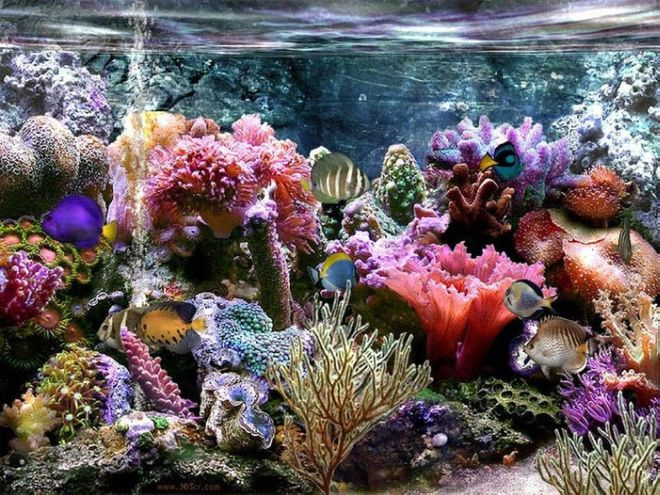 Your 'These Underwater Flowers Are Really Beautiful